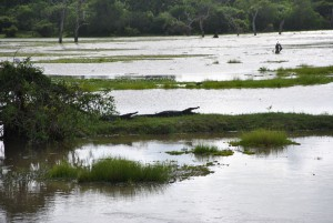 Krokodiler på stranden vid floden